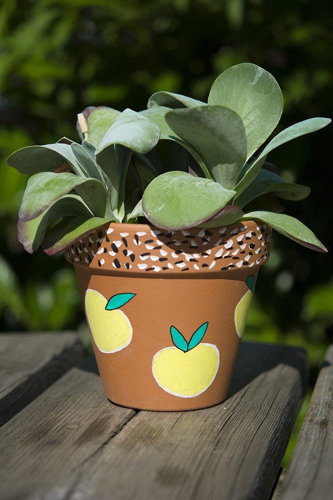clay-pot1-min-2
